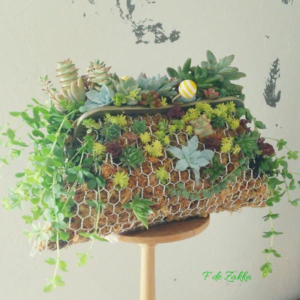 多肉植物のがま口鉢