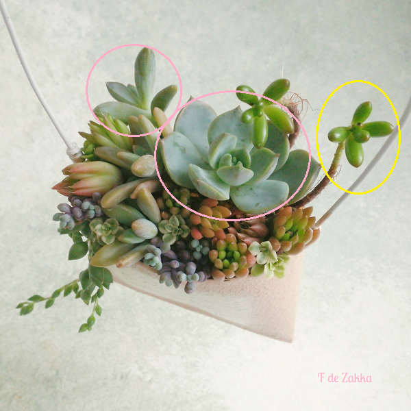 succulent-explanation
