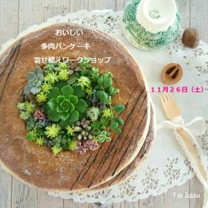 pancakes-succulent-cover