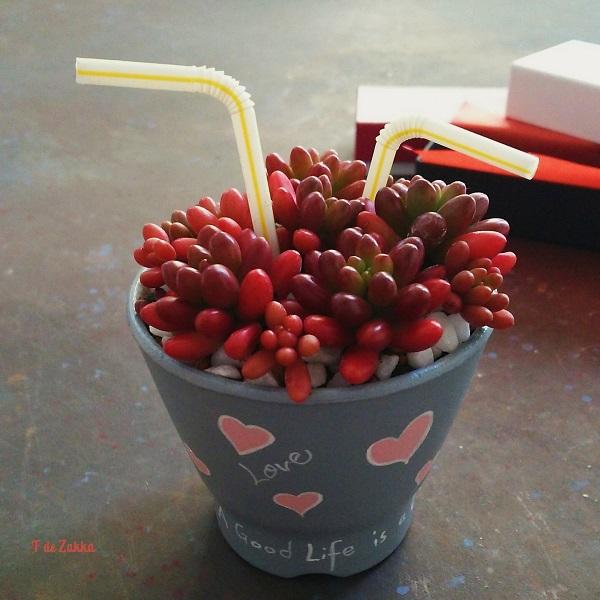 多肉植物のバレンタイン