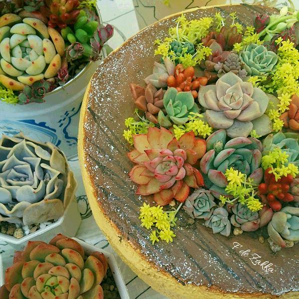 多肉植物のパンケーキ植木鉢