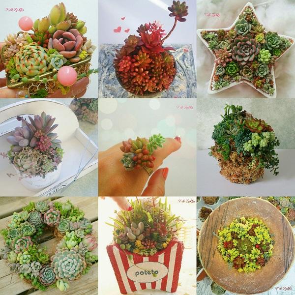 多肉植物の寄せ植え2017