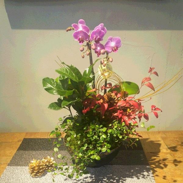 マイクロ胡蝶蘭の寄せ植え