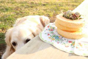 愛犬と多肉