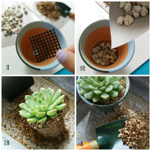 多肉植物、植木鉢、植え替え、ギフト