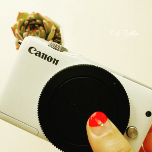 多肉植物の撮影