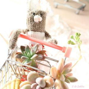 多肉植物のお買い物
