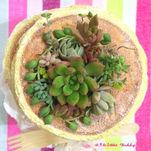 パンケーキ植木鉢の寄せ植え